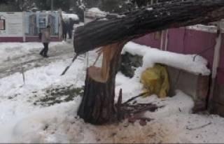 Ağaçlar Kar Yağışına Dayanamadı