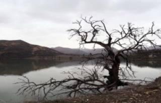 Arduç Çifti 5 Aydır Köyde Mahsur Kaldı