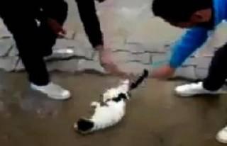 Çevirerek Kedinin Başını Döndürdüler