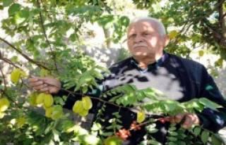 'Toprak Dede'nin Tropikal Meyve Aşkı