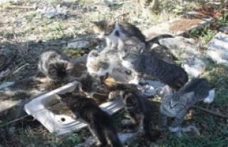 Yavru Kedilerin Yaşam Mücadelesi