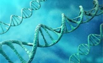 Tüm vücudu yenileyebilen gen keşfedildi