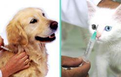 Kedi ve Köpeklerde Dış Parazit Aşısı Neden Gereklidir?