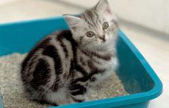 Kediler Kabız Olur mu?