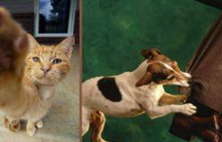 Kedi tırmalaması ya da köpek ısırması durumunda ilk ne yapılmalı?