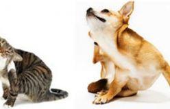 Kedi ve Köpeklerde Uyuz