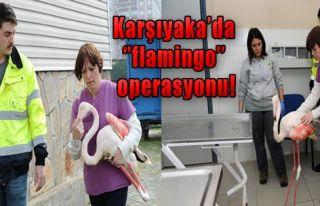 Yaralı Flamingo Tedavi Edildi!