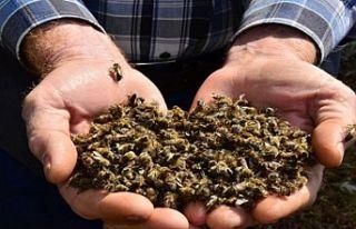 5 milyon arı telef oldu