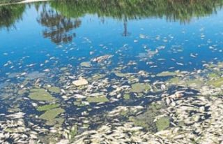 Balık ölümlerinde 'kimyasal' şüphesi