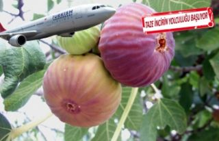 Taze incir, hava kargoyla uçuşa geçecek