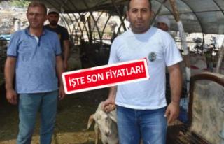 İzmir'in pazarlarında kurban telaşı sürüyor