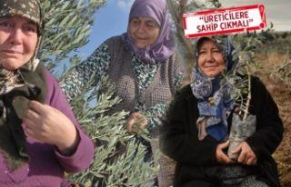 Yırca'da hukuk mücadelesi sonlandı: Santral...