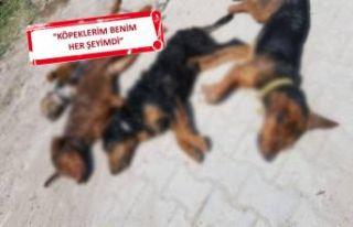 Kütahya'da zehirlenen 10 köpek öldü!