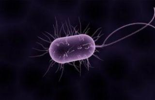 Bu bakteriye dikkat: İngiltere'de 12 can aldı!