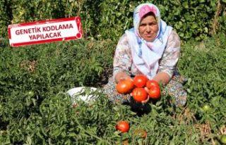 KArşıyaka'dan 'Yamanlar Domatesi'...