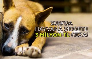 2019'da hayvana şiddete 3 milyon TL ceza!