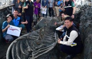 Tayland'da 5 bin yıllık balina fosili bulundu