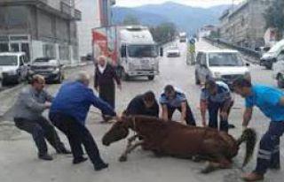 Bursa'da Sahipsiz Atı Kurtarma Operasyonu