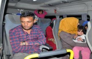 Ayvacık'ta 36 Kaçak Yakalandı