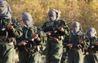 11 PKK'lı Ölü Ele Geçirildi
