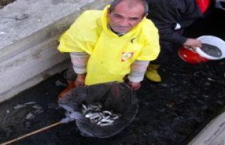 Binlerce Balığı Telef Olmaktan Kurtardılar
