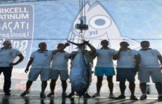 Çeşme'de İki Günde 446 Kilo Balık Yakalandı