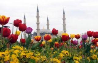 Edirne'de Lale Güzelliği