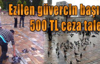 Ezilen Güvercin Başına 500 Tl Ceza Talebi
