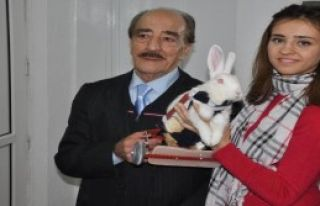 Felçli Tavşana Yürüteç Takıldı