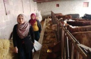 Girişimci Eltiler Besi Çiftliği Kurdu