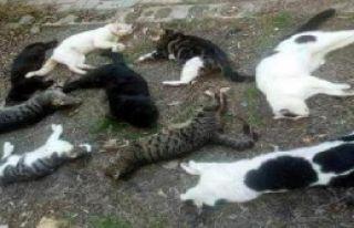 -Kedi Ve Köpek Ölümlerine Tepki