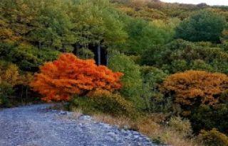 Sonbaharda Renk Cümbüşü