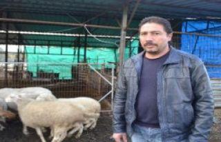 Çalınan Hayvanlar, İzmir'de Bulundu
