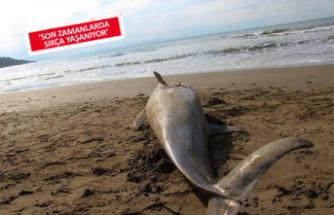 Ölü yunus sahile vurdu