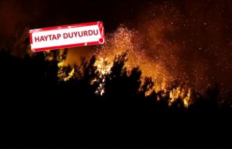 İzmir'de 500 hektarlık alanı kül oldu: Tedavilerini üstlendi