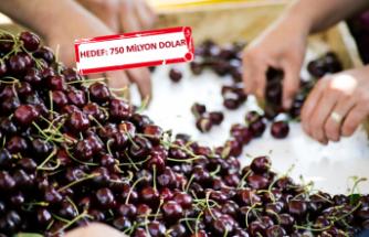 Kiraz, üzüm ve nar ihracatını ikiye katlayacak URGE Projesi start alıyor