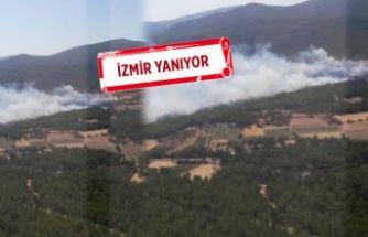 Urla'da orman yangını, evleri terk ediyorlar, bir ev yandı