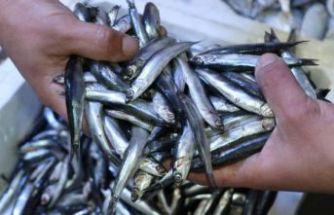 Hamside av yasağı süresi uzatıldı