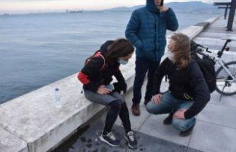 İzmir'de iki kadına köpek saldırısı: Denize atladı!