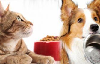 Köpek Mamasıyla Kedi Beslenir mi?