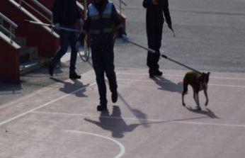 Okula giren pitbull 5 öğrenciyi hastanelik etti