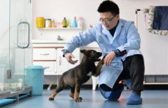 Çin, polis köpeklerini klonluyor