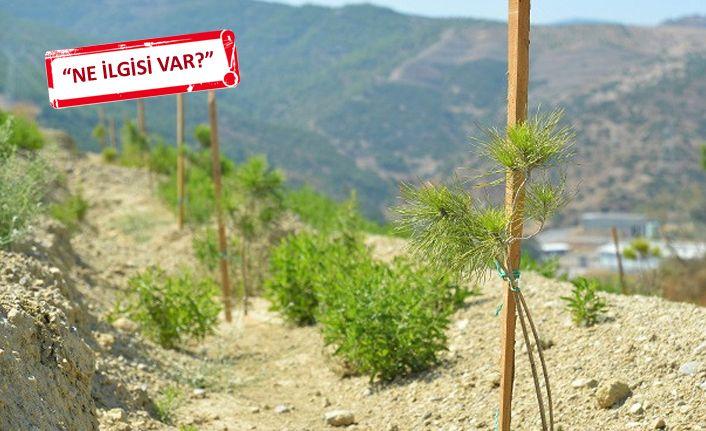 Ağaçlandırma çalışmalarına 'seçim' yasağı
