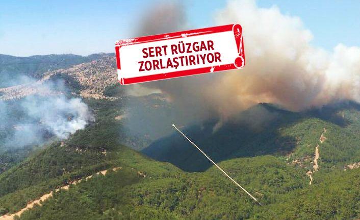 Karabağlar'da orman yangını, Kavacık üzüm bağları yandı