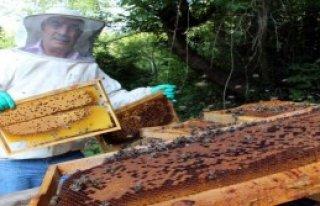 13 Kovandaki Arıların Tümü Telef Oldu