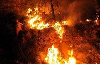 Milas'ta ormanı yangını!