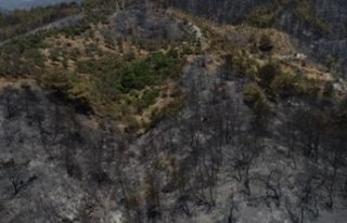 Bakan'dan yangını paylaşımı: Ormanın küllerini...