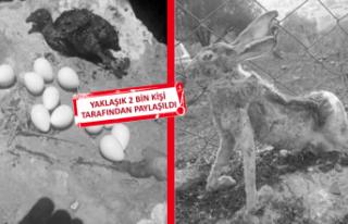 Bu fotoğraflar İzmir yangınından mı?