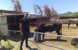 Haluk Levent, Ferdinand'ın yavrusunu ziyaret...