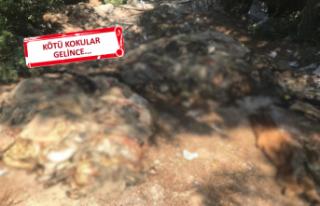 İzmir'e yakışmayan görüntü: Ormana atmışlar